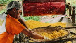 Farinha é produzida pelos próprios moradores em reserva sustentável no Amazonas (Foto: FAZ/Divulgação)