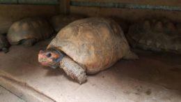 Comércio ilegal de animais selvagens era feito pelas redes sociais (Foto: Ibama/divulgação)