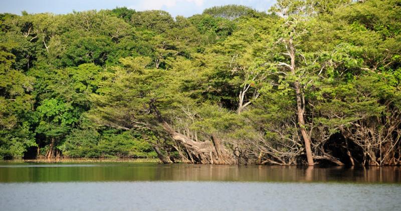 Lago na Reserva extrativista Jauaperi Amazonas: área de proteção dos estoques pesqueiros (Foto: Zig Koch WWF-Brasil)