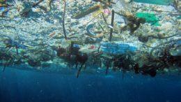 Plástico nos oceanos: poluição mortal para animais da vida marinha (Foto: NOAA Marine/Debris Program/Divulgação)