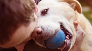 STJ dá a ex-marido direito de visitar cão, mas nega a guarda de filhos