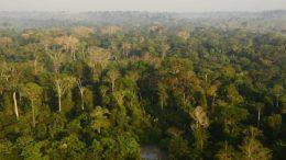 Preservação da floresta amazônica apenas centrada no carbono é arriscada, alerta estudo da Embrapa (Foto: Embrapa-PA/Divulgação)
