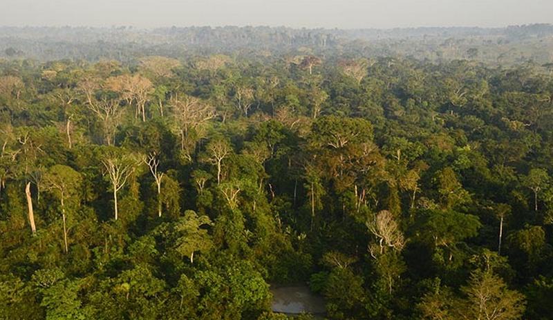 Resultado de imagem para amazonica