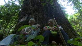 Brasil é líder em mortes de ambientalistas, afirma ONG