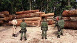 Toras de madeira nobre foram avaliadas em R$ 76,9 mil reais, segundo o Ipaam Foto: Ipaam/Divulgação)