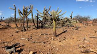Calor eleva risco de desertificação no Nordeste, revela pesquisa