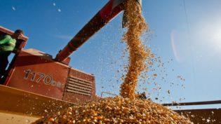 Safra de grãos é a segunda melhor com 228,33 milhões de toneladas