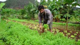 Resolução da ONU dá direito ao trabalhador, individualmente ou coletivamente, inclusive o direito de ter acesso e uso da terra (Foto: SDR/Divulgação)