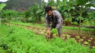 Brasil não apoia declaração da ONU por direito de trabalhadores rurais