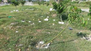 Vândalos destroem mais de 100 mudas de árvores no Igarapé do Mindu