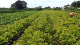 Conforme pesquisa, consumidores não creem em danos ao meio ambiente com a produção de alimentos (Foto: Elza Fiúza/ABr)