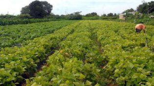 Consumidor acredita que produção de alimentos não ameaça o meio ambiente