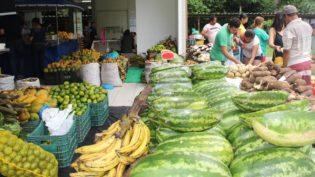 Pirarucu de manejo ambiental será vendido em Manaus na feira da Ufam
