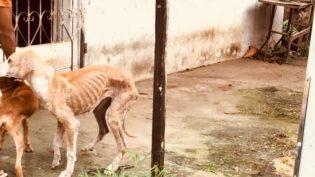 Delegacia em Manaus envia 38 inquéritos de maus tratos a animais à Justiça