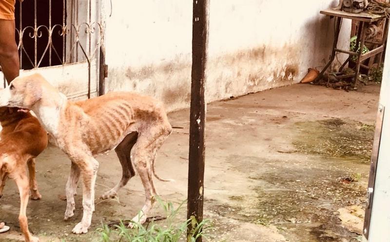 Em apenas dois casos, dezenas de cães foram encontrados abandonados e doentes em Manaus e Iranduba (Foto: SSP-AM/Divulgação)