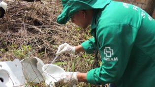 Pesquisa revela que é crucial impedir nascimento do mosquito Aedes aegypti