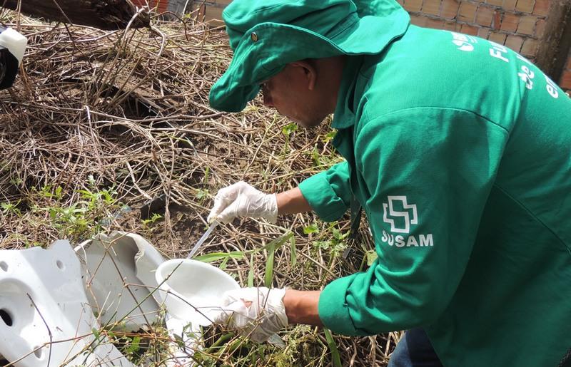 Pesquisador coleta larvas do Aedes aegypti para estudo sobre infecção do mosquito antes de nascer (Foto: FVS-AM/Divulgação)