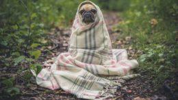 cão na floresta
