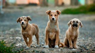Senador propõe aumentar pena para crimes de maus-tratos contra animais