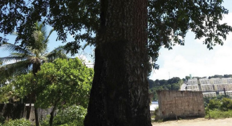 Lote de terra na Comunidade Rio Piorini, em Manaus, está entre os bens que serão leiloados (Foto: TRT11/Divulgação)