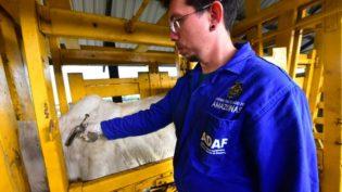 Devido à falta de vacinas, Adaf prorroga vacinação contra aftosa no Amazonas