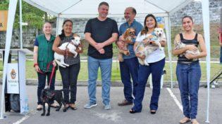 Campanha antirrábica vai imunizar 234 mil animais em Manaus