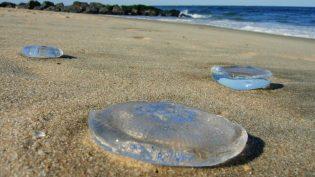 Águas-vivas deixam 31 mil banhistas feridos no litoral do Rio Grande do Sul