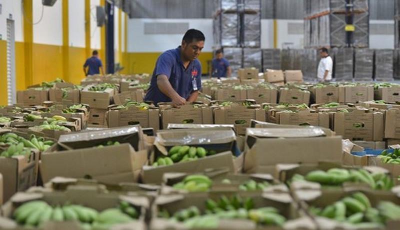 Bananas adquiridas para a merenda escolar. Produtores têm até quinta para se cadastrar (Foto: ADS/Divulgação)