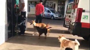 Cães seguem ambulância e esperam morador de rua ser atendido em hospital