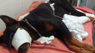 Cachorro é resgatado após ter sido enterrado vivo em Alagoas