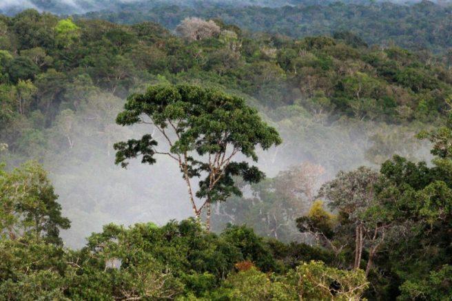 Floresta Amazônica (Foto: Valter Calheiros)