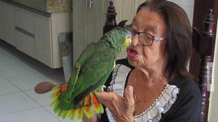 Ibama tenta tirar papagaio de idosa, mas perde em todas as instâncias judiciais