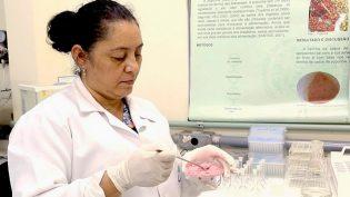 Alimentos funcionais são criados a partir de frutas amazônicas