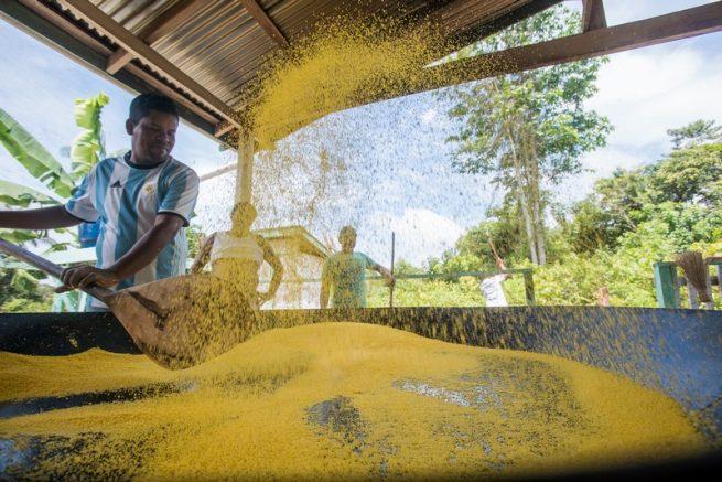 Produtores aprimoram fabricação de farinha (Foto: Léo Lopes/Instituto Mamirauá)