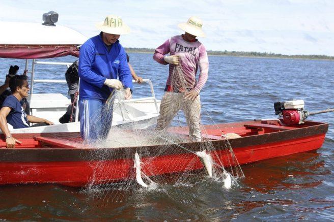 Captura do mapará ocorre em lago próximo a Manaus (Foto: Emerson Martins/Secom