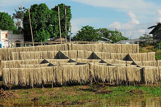 Juta: potencialidade natural da Amazônia (Foto: Fapeam/Divulgação)
