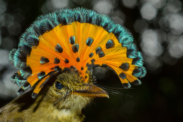 documentário-na-amazônia