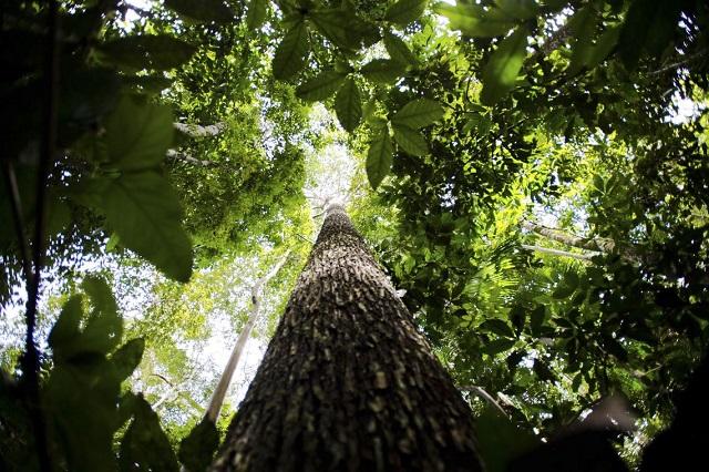 A reservação ambiental é um dos eixos da reunião do Fórum neste ano, e a Amazônia é um foco de preocupação em uma Davos (Foto: Marcelo Camargo/ABr)