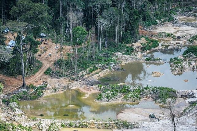 garimpo-Pará-Flora