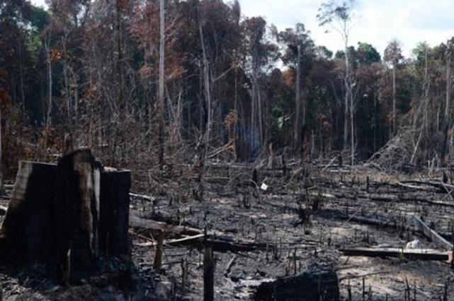 Neste ano, o desmatamento subiu 29,5% na Amazônia Legal em relação ao ano passado (Foto: ABr/Agência Brasil)