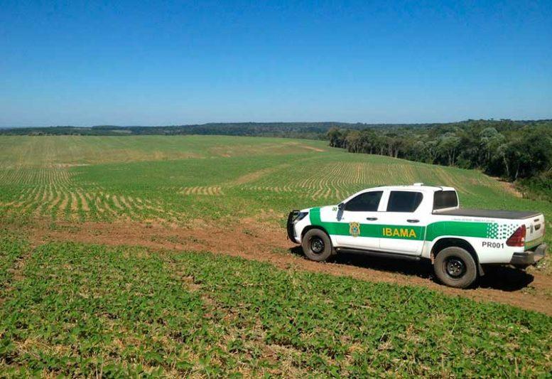 O desmatamento de 14.502 hectares registrado mais uma vez está concentrado na Bahia, em Minas Gerais e no Paraná (Foto: Ibama/Divulgação)