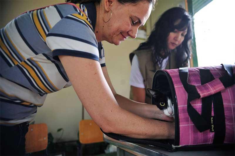 Pesquisa apura transmissão da Covid entre animais e humanos (Foto: Marcelo Camargo-ABr)