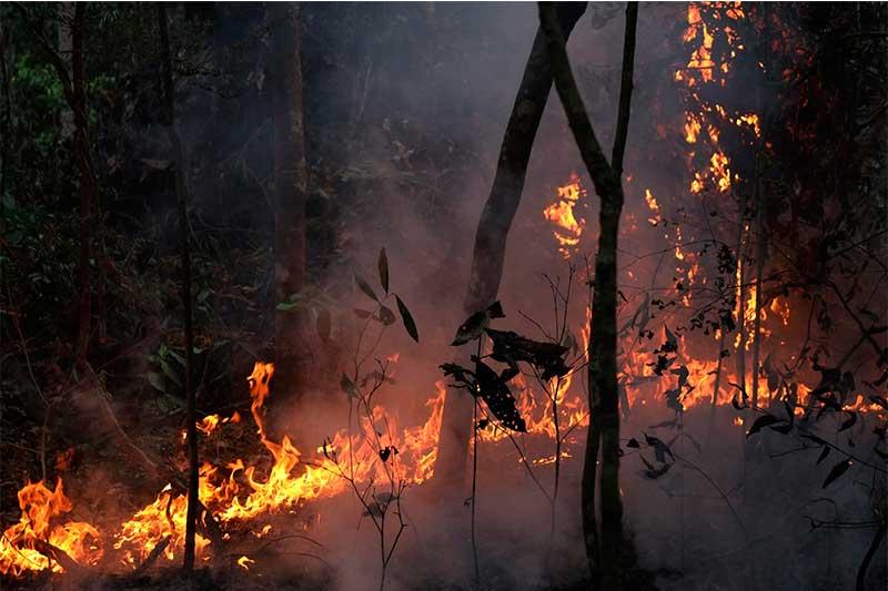 Querimada na Amazônia: dados disponíveis para o público (Foto: Paulo Brando/Ipam)