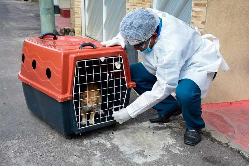 Animais devem ser isolados aos primeiros sintomas da doença (Foto: Valdo Leão/Semcom)