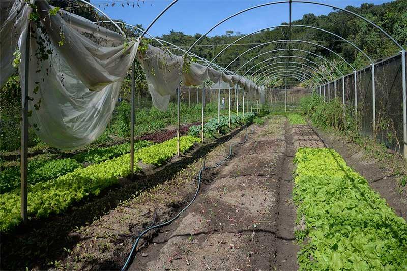 Instrução Normativa institui regras para cultivo de hortaliças (Foto: Tomaz Silva/ABr)