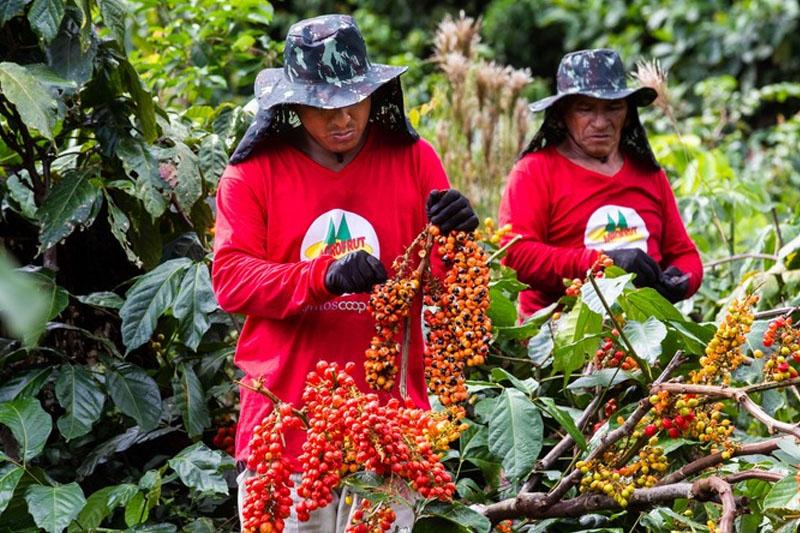 agricultura no amazonas